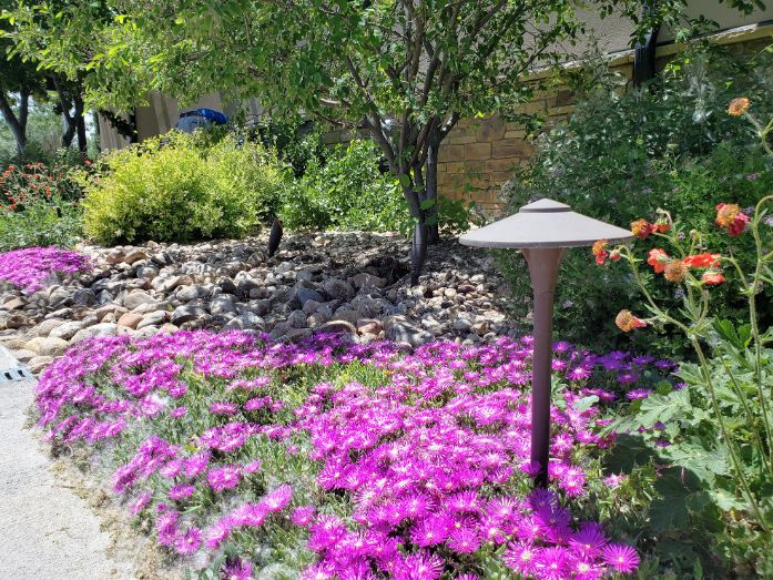 a light outside in a bed of pink flowers