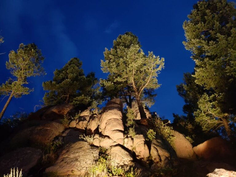 Trees lighted on top of a rocky hill