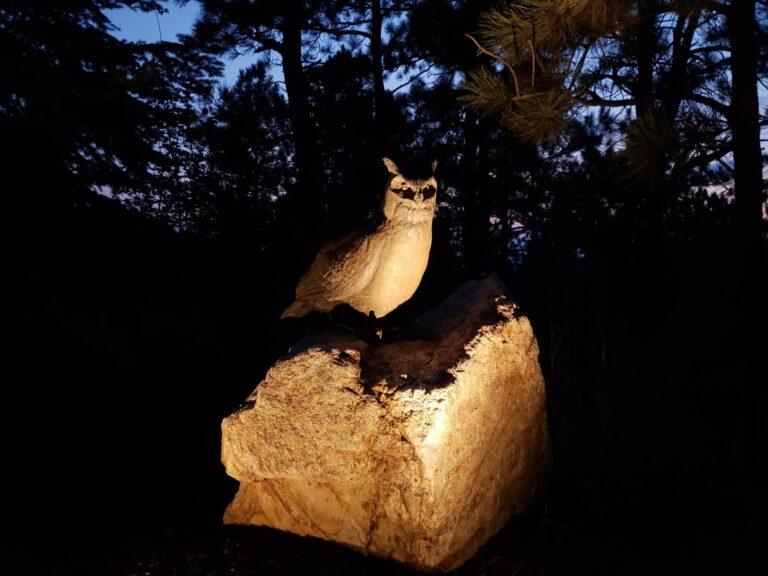 Lighted owl statue