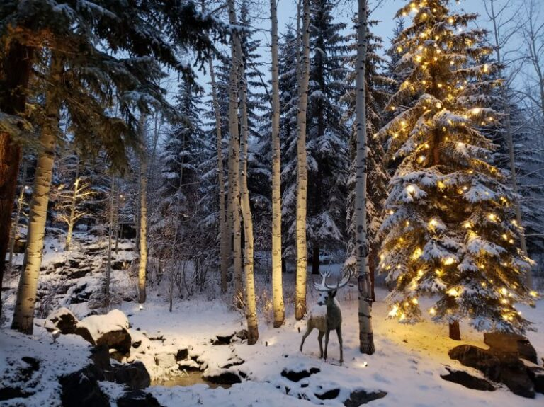 Deer in snow covered forest with lights
