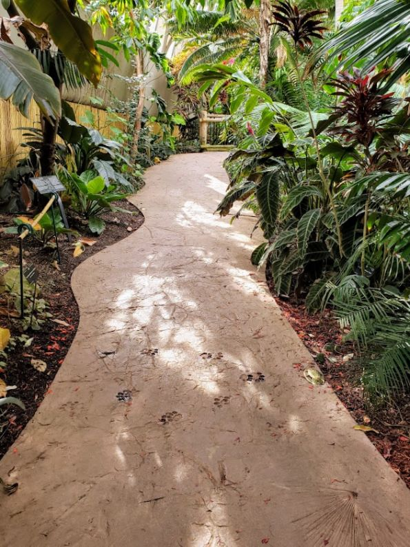 Pathway with tropical plants