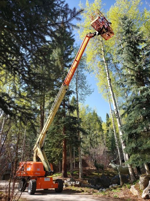 Orange Lifter in the trees