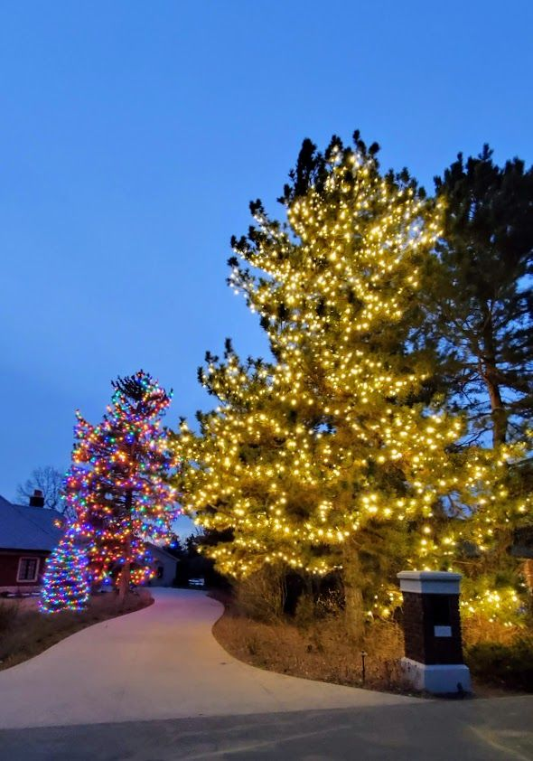 Trees with yellow lights and multicolored lights