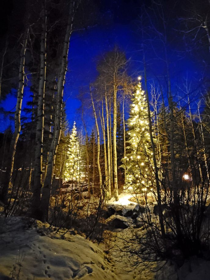 lighted trees in the forest
