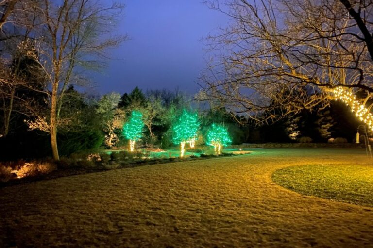 House with green and clear lighted trees 3