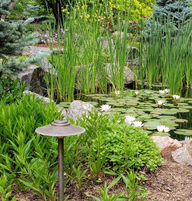 Pond plants and light
