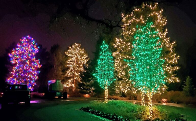House with green and clear lighted trees