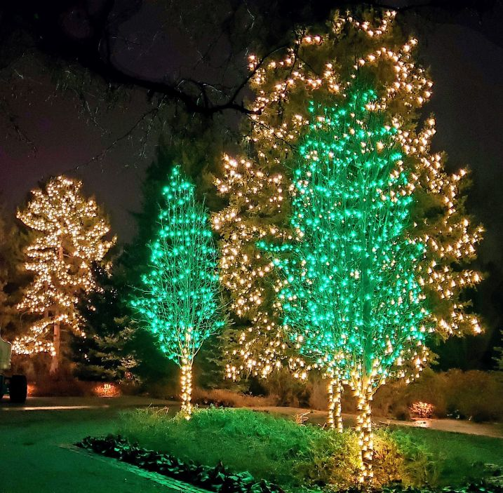 Green and clear lights in trees