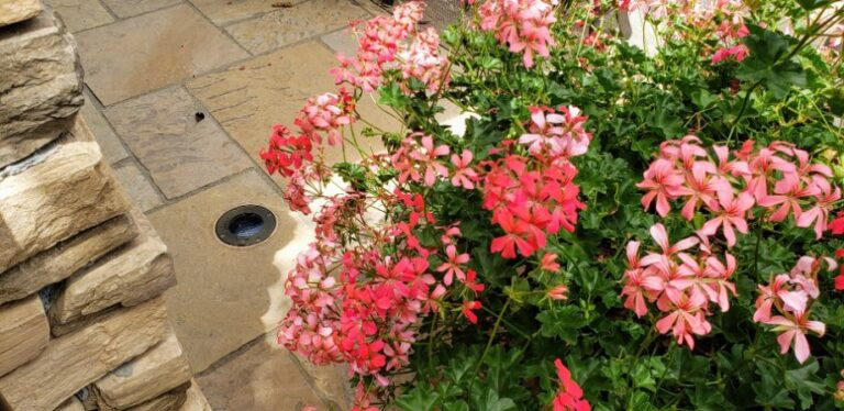 Pink flowers with a light in stone paver
